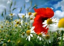 福音戒毒纪录片:十字架与罂粟花